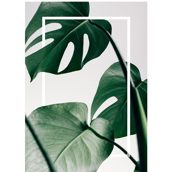 "Картина-репродукция 70x100 см ""Frame Monstera"""