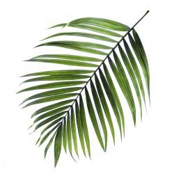 """Репродукция на холсте 32x32 см """"Пальмовый лист"""""""