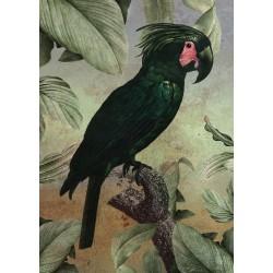 """Репродукция на холсте 60x80 см """"Черный попугай"""""""