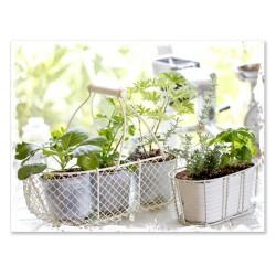 """Репродукция на холсте 60x80 см """"Green Herbs"""""""